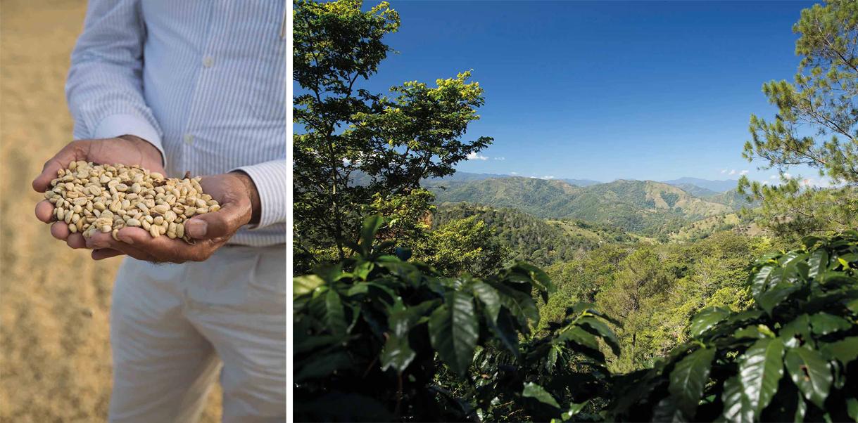 리퍼블리카 도미니카나 바예 델 시바오 커피는 자연의 보호 아래 진귀한 풍미를 갖게 된다.