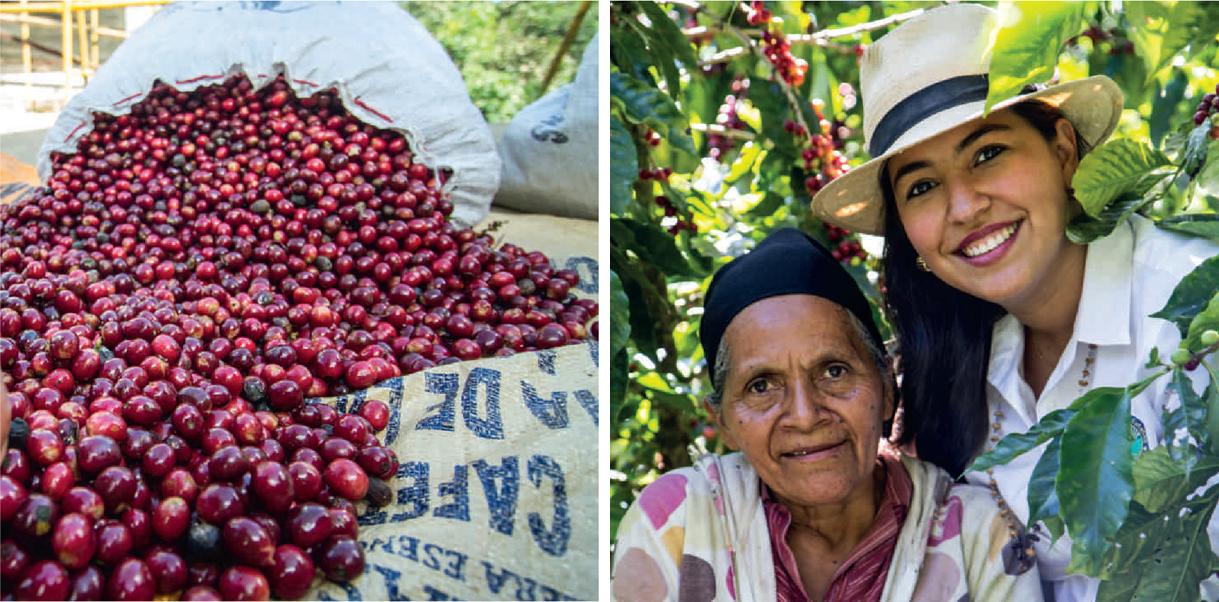 최적의 환경과 까다로운 노력의 결실로 탄생한 니카라과 지역의 원두